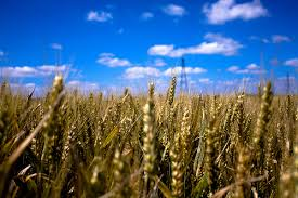 Tabula Rasa – about the Wheat and the Tares